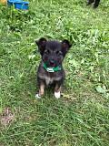 Супер щенок from Minsk