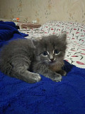 Отдам даром котят из г.Донецк