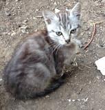 Кошечка в добрые руки Makiyivka