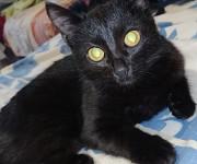 Кошечка Mahilyow