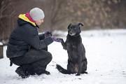 Отдам в хорошие руки крупную собаку девочку Аврору Kiev