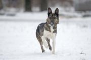 Отдам в хорошие руки активную собаку Хэндли Kiev