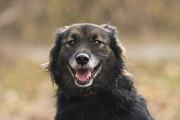 Отдам в хорошие руки милейшую собаку Габи Kiev