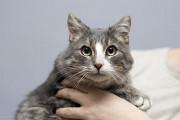 Віддам в добрі руки молодого котика Альбуса Kiev