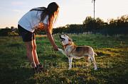 Собака Вашей мечты-в дар Москва