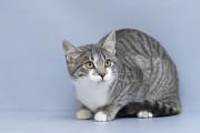 Віддам в добрі руки кошеня підлітка, дівчинку Менді Киев