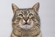 Віддам в добрі руки милого, доброго котика Тимошу Киев