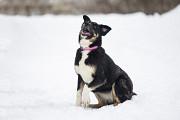 Віддам в добрі руки молоду собаку дівчинку Жанін Киев