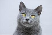 Віддам в добрі руки молоду кішечку Грейс Киев