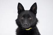 Віддам в добрі руки маленьку молоденьку собачку Руті Киев