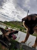 Спасите щенят! из г.Минск