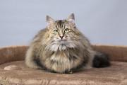 Віддам в добрі руки дуже ніжну, молоду кішечку Робіну Киев
