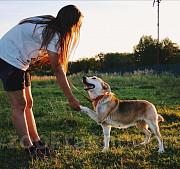 Собака, о Которой Вы мечтали! Москва