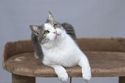 Віддам в добрі руки чудового котика Джусіка Киев