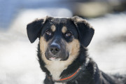 Отдам в хорошие руки молодую собаку Ласунку Киев