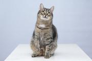 Віддам в добрі руки молодого котика Тиграна Киев