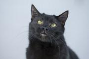 Отдам в хорошие руки улыбающегося молодого котика Джонни Киев