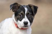 Отдам в хорошие руки щенка девочку Рейни Киев