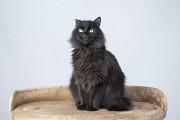 Отдам в хорошие руки молодого котика Кейта Киев