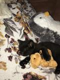 Отдам котёнка даром из г.Киев