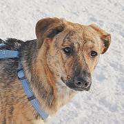 Замечательная собака Грушенька ищет семью Москва