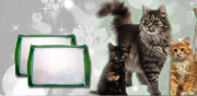 Free Value Cat Pads из г.Нью-Йорк