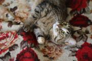 Кошка в добрые руки! Симба from Kamensk-Ural'skiy