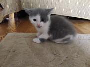 Котята Penza