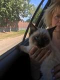 Потерялся котенок Минск