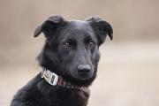 Отдам в хорошие руки молодую собаку Четти Киев