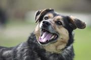 Отдам в хорошие руки симпатичного пса Юнкая Киев