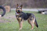 Отдам в хорошие руки молодую собаку Замиру Киев