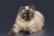 Отдам в хорошие руки юного котика Джерри Киев