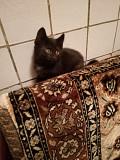 Отдам котят даром Novosibirsk