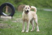 Отдам в хорошие руки солнечную собаку Тайри Киев