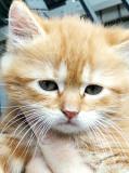 Отдам котят в хорошие руки Краматорск