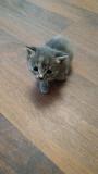 Отдам даром котят в хорошие руки Mykolayiv