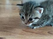 Красивейшие котята, которых полюбит каждый Melitopol'