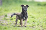 Отдам в хорошие руки небольшую собачку подростка Алексу Kiev