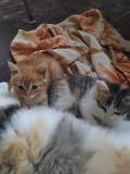 Котята ищут дом! Luhansk