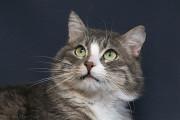 Отдам в хорошие руки молодого котика Альбуса Kiev