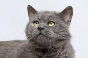 Отдам в хорошие руки колоритного кота Кузю Kiev