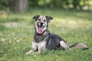 Отдам в хорошие руки жизнерадостную собаку Зэльду Kiev