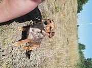 Добрая собака ищет хозяина Krupki