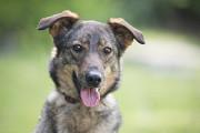 Отдам в хорошие руки самую умную собаку в приюте Джерси Kiev