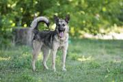 Отдам в хорошие руки молодую активную собаку Верону Kiev