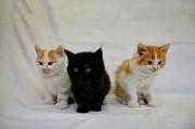 Отдадим прекрасных котят в хорошие руки Svyetlahorsk