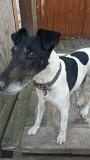 Найдена собака from Kramators'k