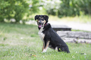 Отдам в хорошие руки молодую собаку Ласунку Kiev