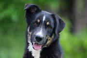 Отдам в хорошие руки сообразительную собаку Жанин Kiev